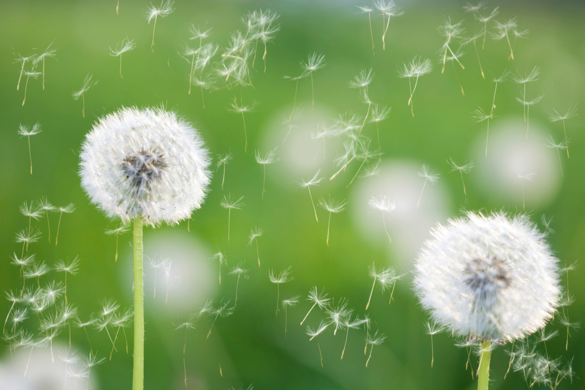 ... to prevent and control seasonal allergies | Duke Regional Hospital